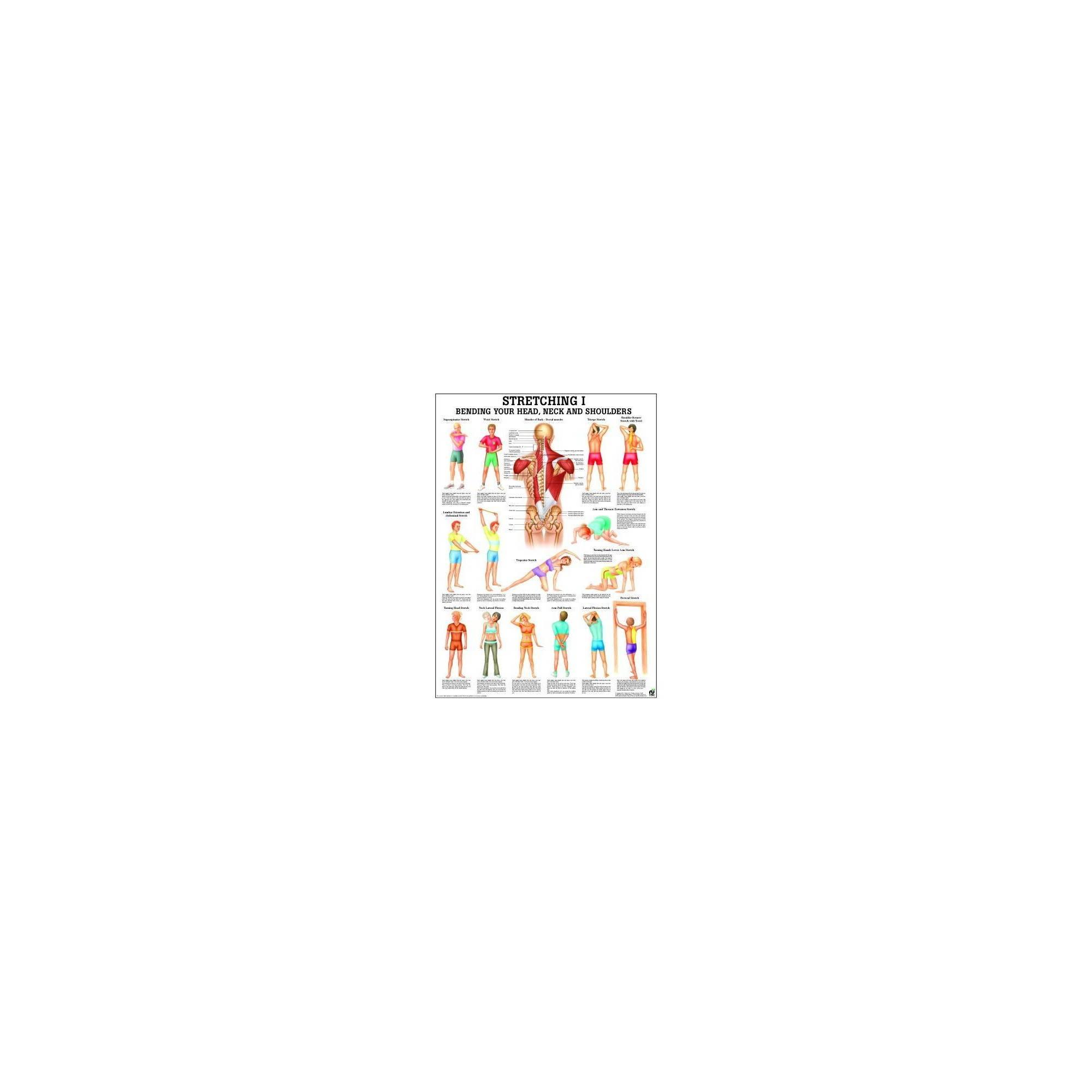 Anatomia człowieka Stretching ćwiczenia poster 70x100cm język angielski,producent: Rudiger Anatomie, zdjecie photo: 1