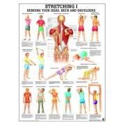 Anatomia człowieka Stretching ćwiczenia poster 70x100cm język angielski Rudiger Anatomie - 1 | klubfitness.pl