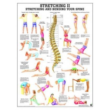 Anatomia człowieka Stretching II ćwiczenia poster 70x100cm język angielski Rudiger Anatomie - 1 | klubfitness.pl