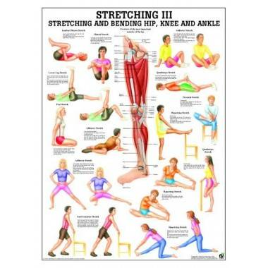 Anatomia człowieka Stretching III ćwiczenia poster 70x100cm język angielski,producent: Rudiger Anatomie, zdjecie photo: 1