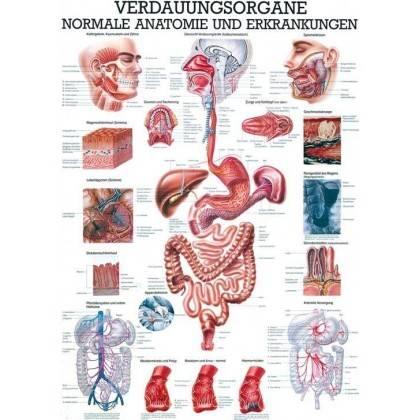 Anatomia człowieka PRZEWÓD POKARMOWY poster 70x100cm język polski Rudiger Anatomie - 1   klubfitness.pl