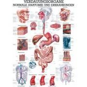 Anatomia człowieka PRZEWÓD POKARMOWY poster 70x100cm język polski Rudiger Anatomie - 1 | klubfitness.pl