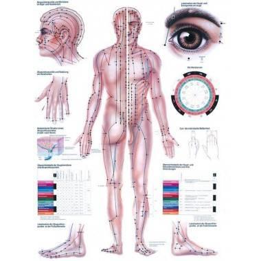 Anatomia człowieka AKUPUNKTURA poster 70 x 100 cm,producent: RUDIGER ANATOMIE, photo: 1