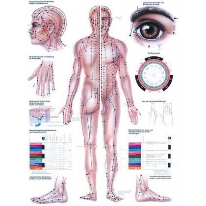 Anatomia człowieka AKUPUNKTURA poster 70 x 100 cm Rudiger Anatomie - 1 | klubfitness.pl