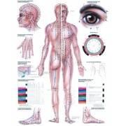 Anatomia człowieka AKUPUNKTURA poster 70 x 100 cm,producent: Rudiger Anatomie, zdjecie photo: 1   online shop klubfitness.pl   s