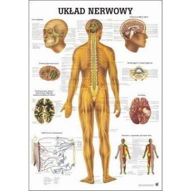 Anatomia człowieka UKŁAD NERWOWY CZŁOWIEKA poster 70 x 100 cm język polski,producent: RUDIGER ANATOMIE, photo: 1