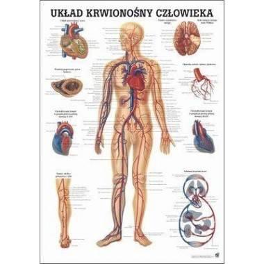 Anatomia człowieka UKŁAD KRWIONOŚNY CZŁOWIEKA poster 70x100cm język polski,producent: Rudiger Anatomie, zdjecie photo: 1 | onlin