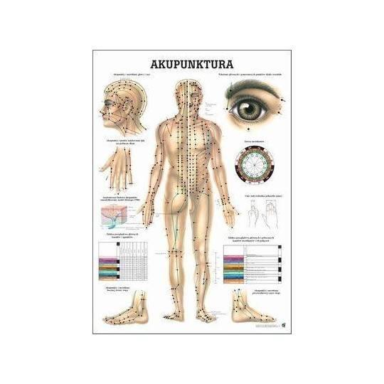 Anatomia człowieka AKUPUNKTURA poster 70 x 100 cm język polski,producent: RUDIGER ANATOMIE, photo: 1