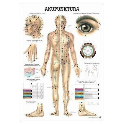 Anatomia człowieka AKUPUNKTURA poster 70 x 100 cm język polski Rudiger Anatomie - 1   klubfitness.pl