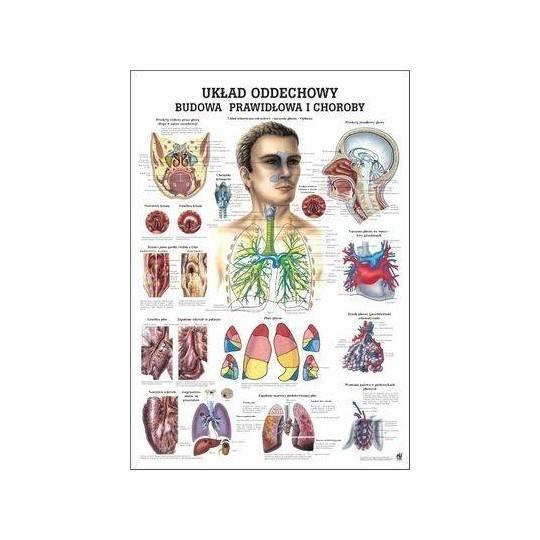 Anatomia człowieka UKŁAD ODDECHOWY CZŁOWIEKA poster 70x100cm język polski,producent: RUDIGER ANATOMIE, photo: 1