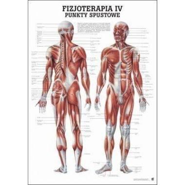 Anatomia człowieka PUNKTY SPUSTOWE poster 70 x 100 cm język polski,producent: RUDIGER ANATOMIE, photo: 1