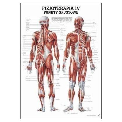 Anatomia człowieka PUNKTY SPUSTOWE poster 70 x 100 cm język polski Rudiger Anatomie - 1   klubfitness.pl
