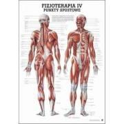 Anatomia człowieka PUNKTY SPUSTOWE poster 70 x 100 cm język polski Rudiger Anatomie - 1 | klubfitness.pl | sprzęt sportowy sport