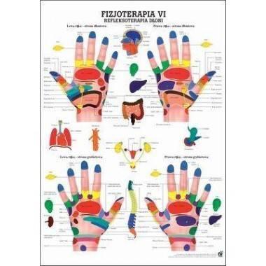 Anatomia człowieka REFLEKSOTERAPIA DŁONI poster 70 x 100 cm język polski,producent: RUDIGER ANATOMIE, photo: 1