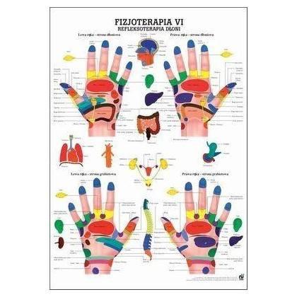 Anatomia człowieka REFLEKSOTERAPIA DŁONI poster 70 x 100 cm język polski,producent: Rudiger Anatomie, zdjecie photo: 1   online