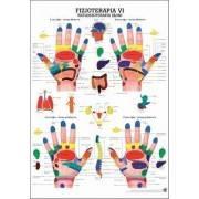 Anatomia człowieka REFLEKSOTERAPIA DŁONI poster 70 x 100 cm język polski Rudiger Anatomie - 1 | klubfitness.pl | sprzęt sportowy
