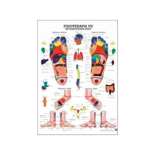 Anatomia człowieka REFLEKSOTERAPIA STOPY poster 70x100cm język polski Rudiger Anatomie - 1 | klubfitness.pl