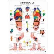 Anatomia człowieka REFLEKSOTERAPIA STOPY poster 70x100cm język polski Rudiger Anatomie - 1 | klubfitness.pl | sprzęt sportowy sp