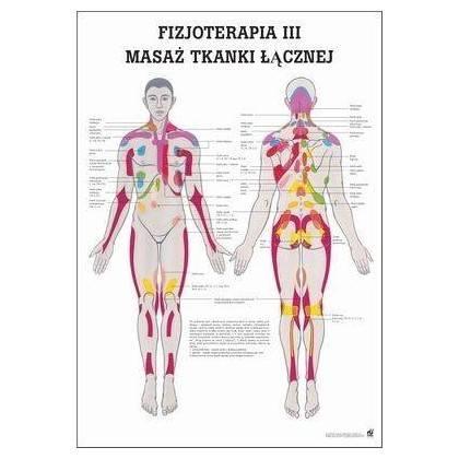 Anatomia człowieka MASAŻ TKANKI ŁĄCZNEJ poster 70x100cm język polski Rudiger Anatomie - 1 | klubfitness.pl