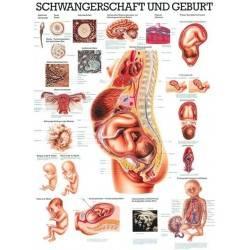 Anatomia człowieka CIĄŻA I PORÓD poster 70x100cm język polski Rudiger Anatomie - 1 | klubfitness.pl