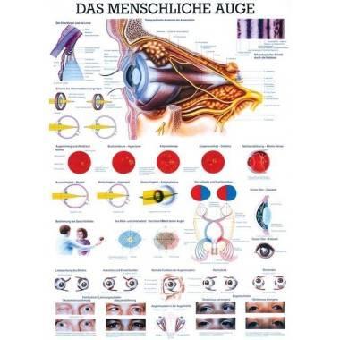 Anatomia człowieka OKO CZŁOWIEKA poster 70x100 cm,producent: RUDIGER ANATOMIE, photo: 1
