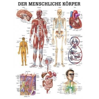 Anatomia człowieka CIAŁO CZŁOWIEKA poster 70x100cm język angielski Rudiger Anatomie - 1 | klubfitness.pl