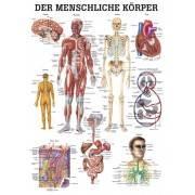 Anatomia człowieka CIAŁO CZŁOWIEKA poster 70x100cm język angielski Rudiger Anatomie - 1 | klubfitness.pl | sprzęt sportowy sport