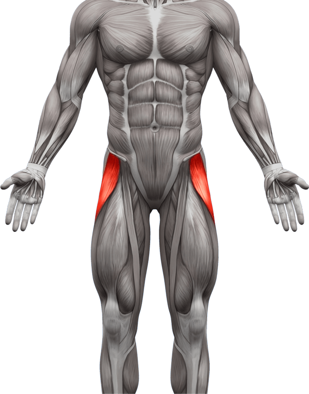Mięśnie brzucha proste skośne | model 3