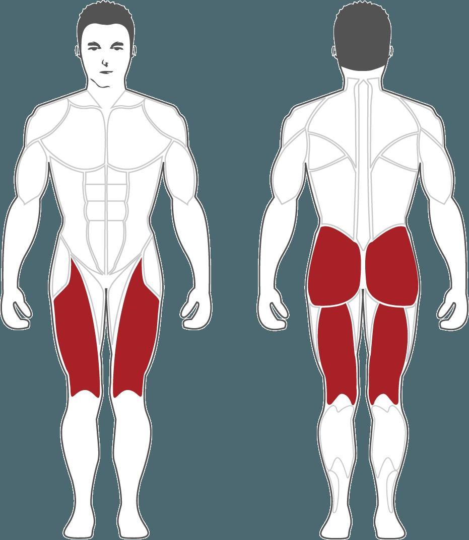 Aktywne mięśnie podczas treningu na CLP600 Steelflex