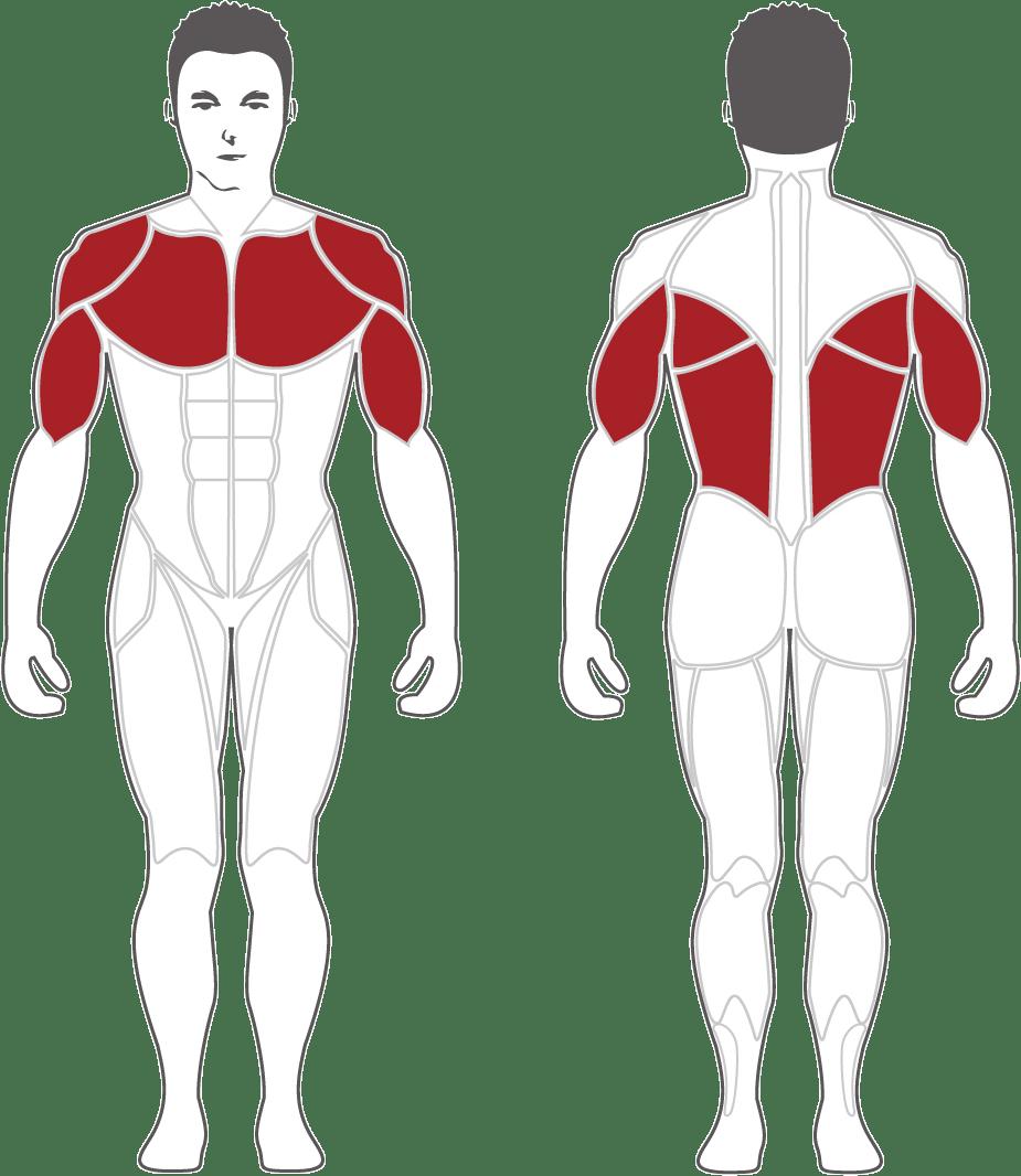 Aktywne mięśnie podczas treningu na CPB300 Steelflex